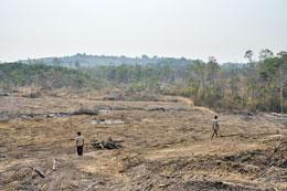 Những cánh rừng ở Campuchia bị san bằng bởi đại công ty của Việt Nam là Hoàng Anh Gia Lai (tháng 3, 2013) AFP