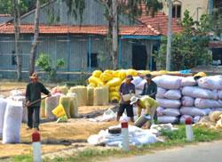 Lúa được phơi trước khi đóng bao. RFA