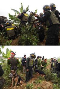 Lực lượng đông đảo cảnh sát đặc biệt cùng chó săn đang cưỡng chế các khu đất của một gia đình không đồng ý giao ở Tiên Lãng (ảnh minh họa) Báo Phapluat