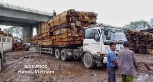 Các xe chở gỗ đên cho công ty NICEWOOD ở ngoại thành Hà Nôi. RFA screen cap