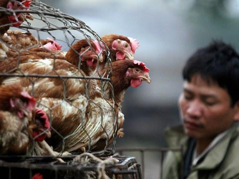 Ảnh minh họa một người bán gà ở Hà Nội