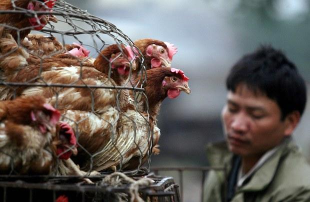 Công an mời người bán gà lên phường: Sự lạm quyền dẫn đến oan sai?