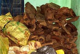Số gổ huỳnh đàn vận chuyển trái phép bị Công an huyện Ba Tơ thu giữ. Source nld