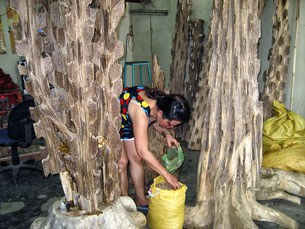 Gỗ huỳnh đàn thuộc nhóm gỗ 1, hay còn gọi là nhóm đại danh mộc, quí hiếm.