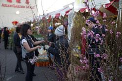 Xem hoa tại  Chợ Tết ở Lillte Saigon hôm 22/01/2014. RFA PHOTO / Ngọc Lan.