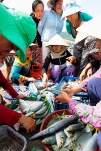 Vợ của những ngư dân phân loại cá tại một làng chài ở Nha Trang hôm 11/01/2011. AFP photo