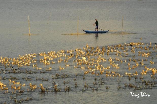 Dân bỏ xứ đi, Đồng bằng sông Cửu Long sẽ ra sao?