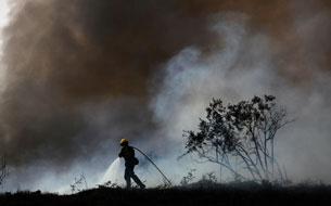 """Tác phẩm """"Cháy rừng"""". Hình do Nick Út cung cấp."""
