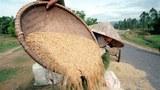 vietnam-rice-farmer-305.jpg