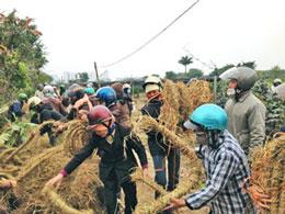 Dân Văn Giang bện rơm làm khiên chắn chống đạn hoa cải của bọn xã hội đen. Photo danluan.org