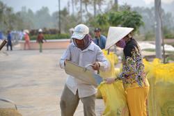 Vụ lúa Đông Xuân vùng ĐBSCL 2011. RFA photo