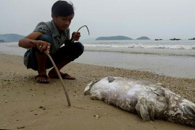 Cá chết trên bãi biển ở huyện Quảng Trạch, tỉnh Quảng Bình hôm 20/4/2016.