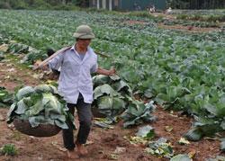 Một nông dân ở Hà Nội. AFP photo