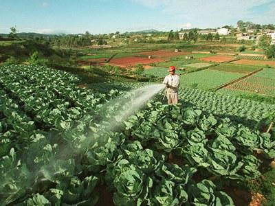 Một nông dân đang tưới rau ở Đà Lạt