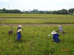 Nông nghiệp miền Bắc. RFA photo