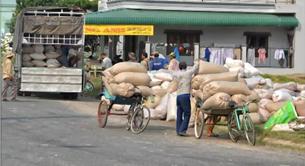 Nông dân bận rộn sau vụ Đông Xuân 2011. RFA