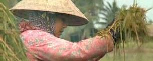 Nông dân Đồng Bằng Sông Cửu Long