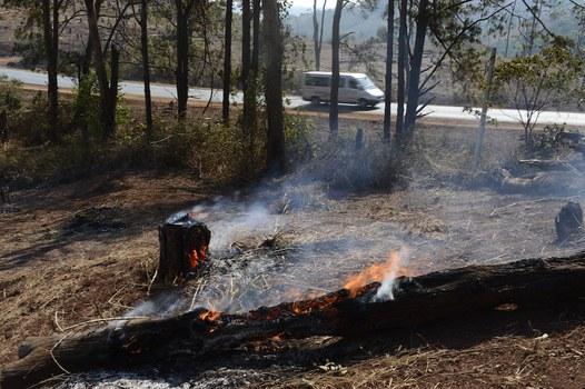 Hình minh hoạ. Hình chụp hôm 12/3/2013 cho thấy cây rừng bị đốt cháy tại một đồi có rừng bị phá ở Đắk Lắk.