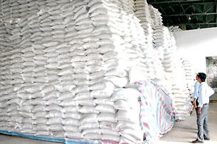 Các doanh nghiệp ở ĐBSCL bắt đầu thu mua lúa gạo tạm trữ. Nguồn C.Phong- SGGP