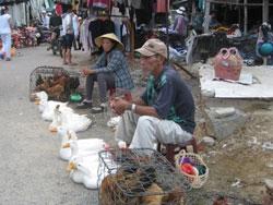 Gia cầm bán tại một chợ ở TPHCM, ảnh chụp trước đây. RFA PHOTO.