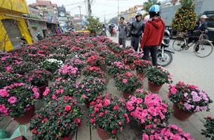 Hoa Tết ở một góc phố Hà Nội