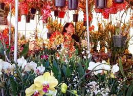 Khu vực bán Hoa lan ở chợ Tết Cali. Photo Ngoc Lan RFA