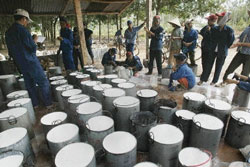 rubber-plantation-250.jpg
