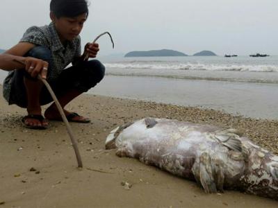Cá chết trên bãi biển Quảng Trạch hôm 20 tháng 4 năm 2016