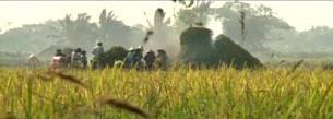Nông dân sử dụng máy gặt. RFA