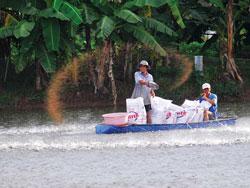 Nông dân đang cho cá tra ănở ĐBSCL, ảnh chụp trước đây. Photo courtesy of sgtt.