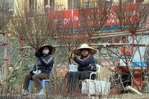 Chợ bán hoa đào ở Hà Nội. AFP