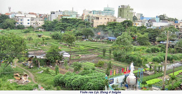 Khu vực Vườn Rau Lộc Hưng ở quận Tân Bình, thành phố Hồ Chí Minh