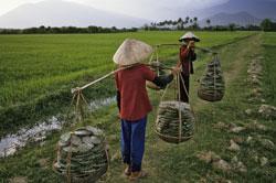 Hai phụ nữ gánh lá xương rồng vừa thu hoạch. AFP photo