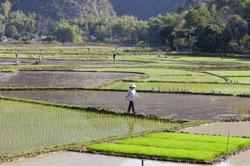 Một cánh đồng trồng lúa ở Mai Châu, tỉnh Hòa Bình, Việt Nam hôm 17/02/2013. AFP PHOTO.