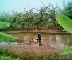 Đầm thuỳ sản bị kẻ lạ vét sạch chớp nhoáng- Source: Vietbao