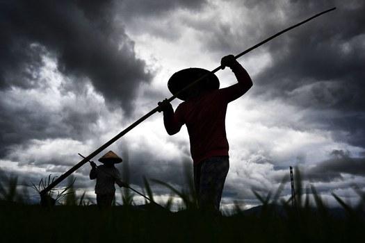 Ảnh minh họa: Người trồng lúa ở Việt Nam.