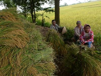 Một gia đình nông dân với đống lúa vừa thu hoạch trên một cánh đồng ở ngoại ô Hà Nội vào ngày 9 tháng 6 năm 2016.