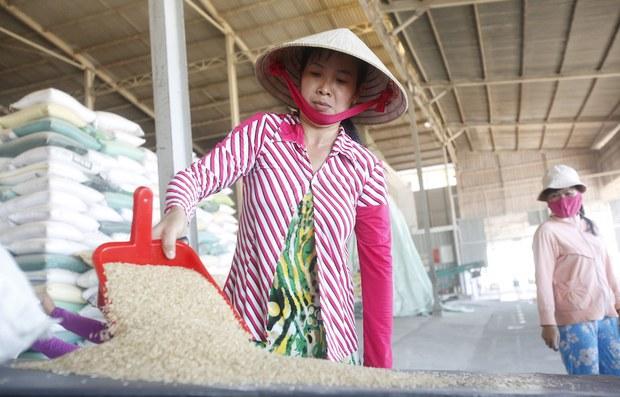 Vì sao Việt Nam nhập gạo tấm của Ấn Độ?