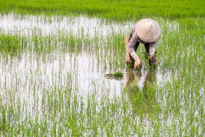 Nông dân đang gieo mạ trên một cánh đồng ở miền Trung hôm 20/1/2016.