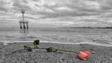 Một cánh hoa hồng được để lại trên bờ biển ở miền Tây Indonesia nơi trận sóng thần kinh hoàng cao gần 40 m đã đánh vào gây cho gần 200 000 người thiệt mạng cách đây 10 năm