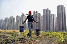Một nông dân Trung Quốc tận dụng những mảnh đất để trồng rau, phía sau là dự án nhà cao từng ở An Huy, Trung quốc. AFP