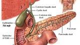 Gallbladder- Túi mật