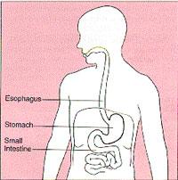 StomachBody200.jpg