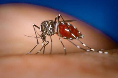 Bệnh sốt xuất huyết bị lây chuyên nhiều do muỗi