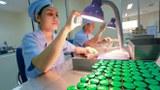 Soi vật lý các sản phẩm huyết thanh kháng nọc rắn lục tre tinh chế trước khi đóng hộp tại Viện Văcxin và sinh phẩm y tế.