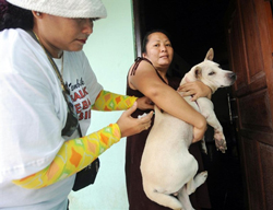 Một nhân viên y tế tiêm phòng bệnh dại cho chó ở Denpasar, Bali hôm 25/10/2010. AFP photo