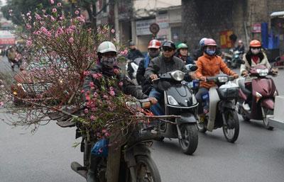 Một nông dân chở hoa đào bán Tết ở Hà Nội hôm 23/1/2017.