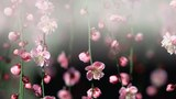 Hoa đào trong sương mù