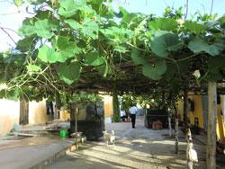 Dàn bầu bí trên đảo Sinh Tồn Đông. RFA files