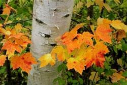 Mùa thu lá đổi màu ở thành phố Amenia, New York.